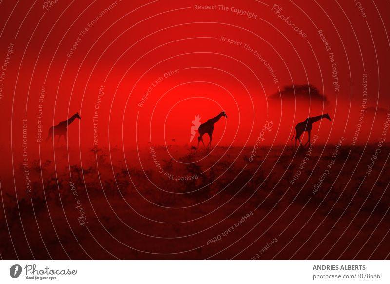 Himmel Natur Sommer Landschaft Sonne Erholung Tier ruhig Umwelt Tourismus Erde Horizont Park Wetter Luft