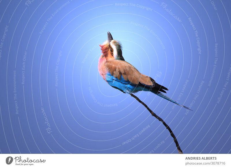 Himmel Ferien & Urlaub & Reisen Natur Sommer blau Tier Umwelt Frühling Tourismus Freiheit Vogel Erde Ausflug Park Wildtier sitzen