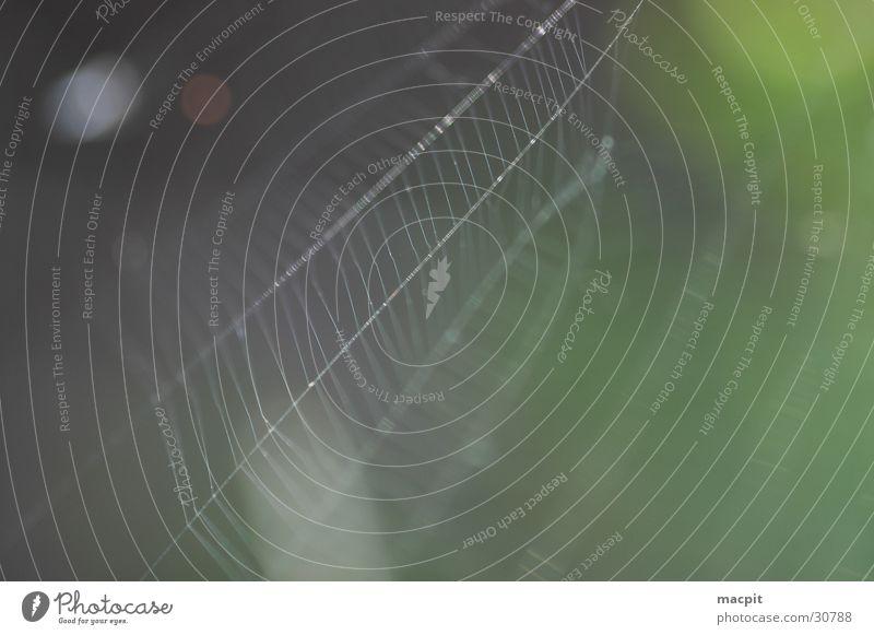 Das Netz Natur Spinne Genauigkeit