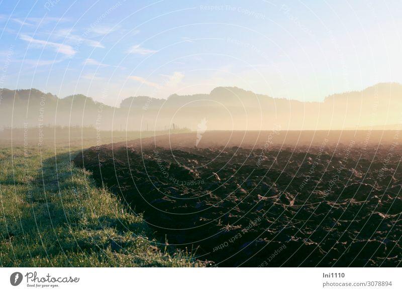 Morgennebel im Oktober Natur Pflanze Erde Himmel Horizont Sonnenaufgang Sonnenuntergang Herbst Schönes Wetter Nebel Gras Feld blau braun grau grün rosa weiß