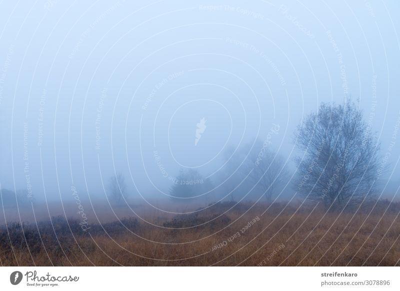 nebulös   Aussichten Natur Pflanze Wasser Landschaft Baum Einsamkeit ruhig dunkel Herbst Umwelt kalt natürlich Gefühle Gras wandern Nebel