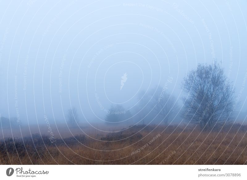 nebulös | Aussichten wandern Umwelt Natur Landschaft Pflanze Urelemente Luft Wasser Wassertropfen Herbst Nebel Baum Gras Sträucher Moor Sumpf Hohes Venn