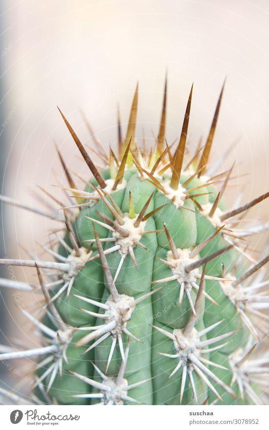 spitz und stachelig Kaktus Spitze zynisch gefährlich Vorsicht Gefahr Botanik Botanischer Garten Pflanze Natur Detailaufnahme Stachel Gewächshaus Dorn