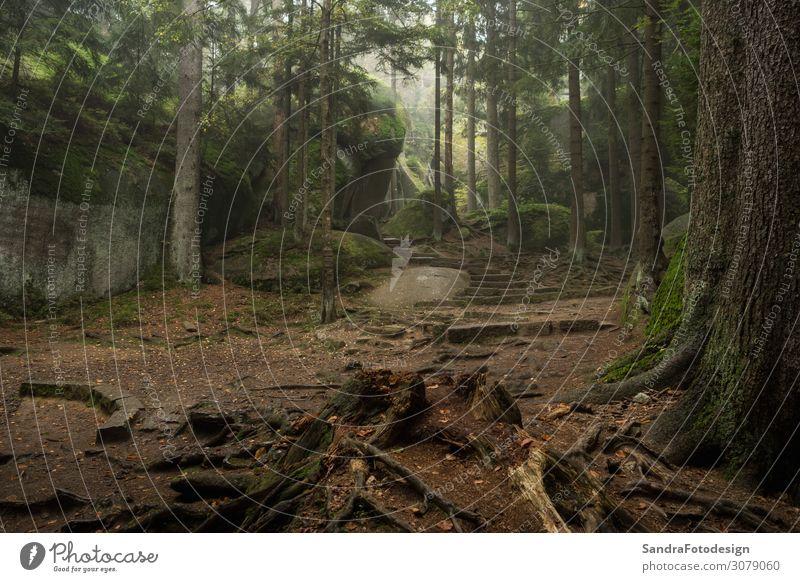 Huge rocks in the forest Freizeit & Hobby Ferien & Urlaub & Reisen Ausflug wandern Natur Park Wald Zufriedenheit luisenburg labyrinth granite autumn hiking tree