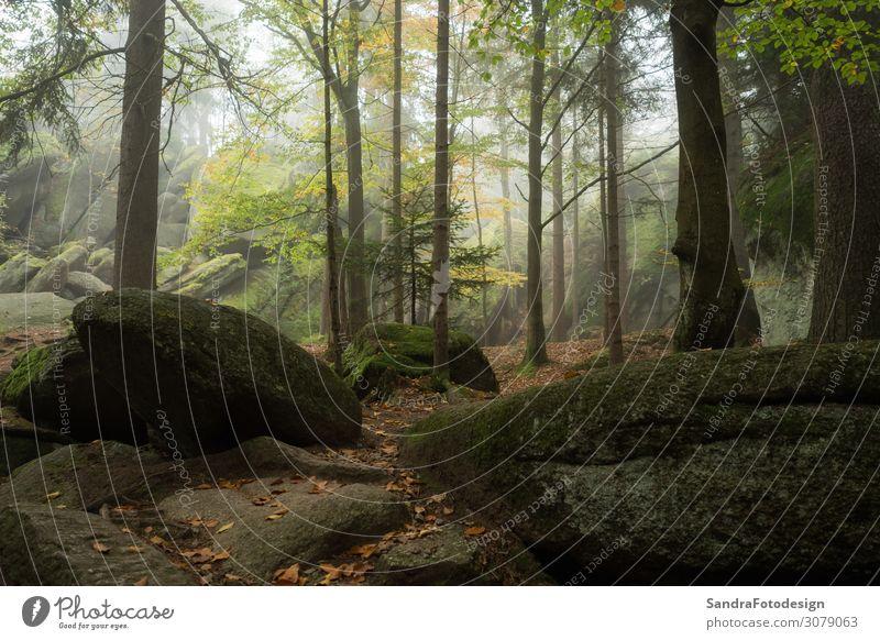 Huge rocks in the forest Freizeit & Hobby Ferien & Urlaub & Reisen Ausflug wandern Natur Park Wald Zufriedenheit Lebensfreude luisenburg labyrinth granite