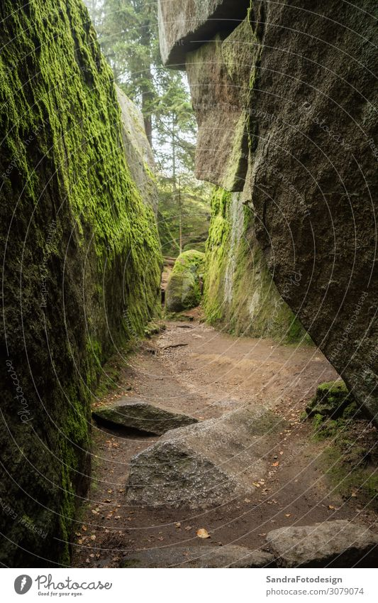 Huge rocks in the forest Freizeit & Hobby Ferien & Urlaub & Reisen Ausflug Abenteuer wandern Natur Landschaft Park Wald Felsen Freude ruhig luisenburg labyrinth