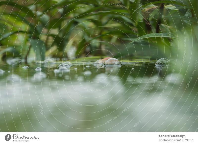 Water bubbles on a small pond Schwimmbad Sommer Natur Wasser Pflanze Park beobachten Coolness nass grün rein water wet river environment texture color fresh