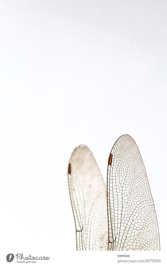 Libellenflügel mit Flügelmal Tier Totes Tier Insekt 1 fliegen braun weiß durchsichtig Aderung Flügelfeld Hintergrundbild Xenias Gedeckte Farben Studioaufnahme