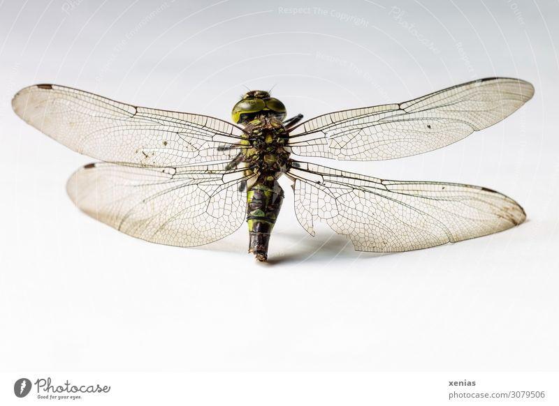 Libellenrest Sommer Tier Herbst Tod Wildtier Flügel Insekt Totes Tier Libellenflügel