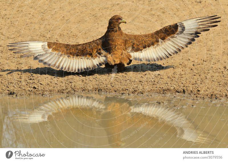 Ferien & Urlaub & Reisen Natur Farbe Wasser Tier ruhig Umwelt Tourismus Freiheit Vogel Ausflug Design Park Wildtier Kraft Abenteuer