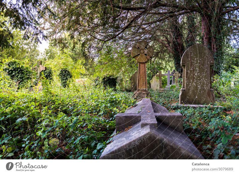 Allerseelen Natur Landschaft Pflanze Sommer Schönes Wetter Baum Gras Sträucher Efeu Blatt Wildpflanze Eibe Park Grabgewölbe Grabmal Grabstein Friedhof