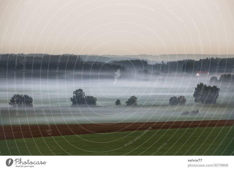 nebulös   Bodennebel Himmel Natur Sommer Wasser Baum ruhig Wald Umwelt Wiese Stimmung Nebel Feld Luft Sträucher Klima Wolkenloser Himmel