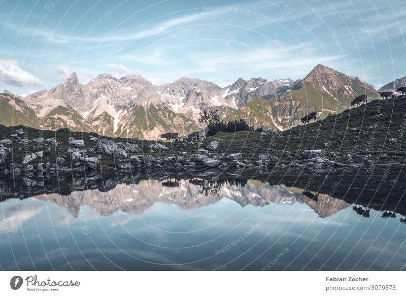 Wanderung zum Guggersee in den Allgäuer Alpen Berge u. Gebirge Natur Landschaft Wasser Himmel Sommer Gipfel Seeufer Nutztier Kuh Rind Herde laufen wandern blau