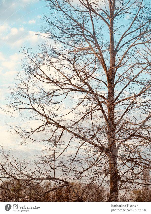 Herbst Winter Baum Doppelbelichtung Umwelt Natur Landschaft Himmel Wolken Schönes Wetter Wald hell blau braun grün türkis weiß Klima Ast Farbfoto Außenaufnahme