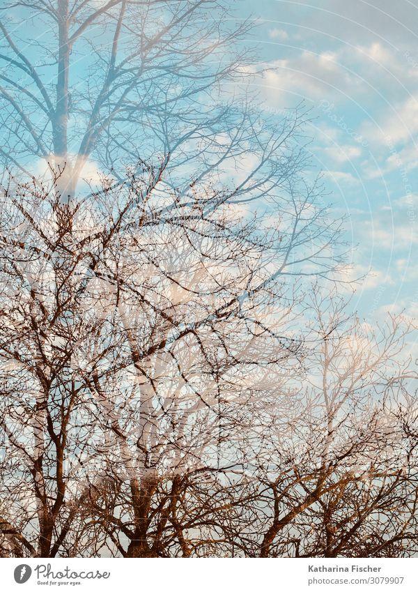 Herbst Winter Doppelbelichtung Umwelt Natur Landschaft Himmel Wolken Klima Wetter Schönes Wetter Baum Park Wald hell blau braun türkis weiß Ast Baumkrone