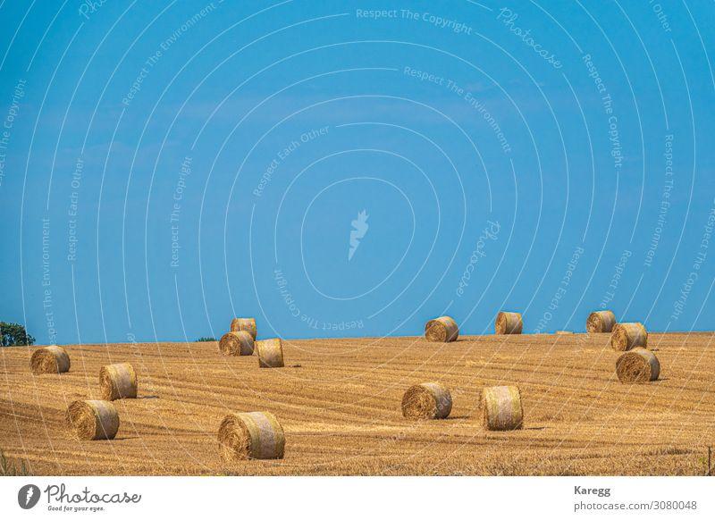 gelbe Strohballen auf Acker Sommer Umwelt Natur Erde Himmel Wolkenloser Himmel Herbst Nutzpflanze Feld trocken blau countryside wheat dry landscape crop field
