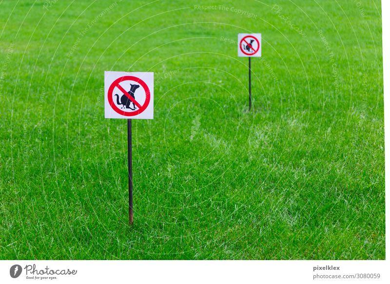Hunde verboten! Sommer Garten Umwelt Natur Gras Park Wiese Menschenleer Haustier Schilder & Markierungen Hinweisschild Warnschild Stadt grün rot schwarz weiß