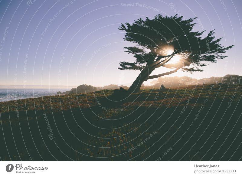 Sonnenlicht, das durch einen Baum am Meer scheint. Strand Umwelt Natur Landschaft Pflanze Wasser Wolkenloser Himmel Sonnenaufgang Sonnenuntergang Sommer Wetter