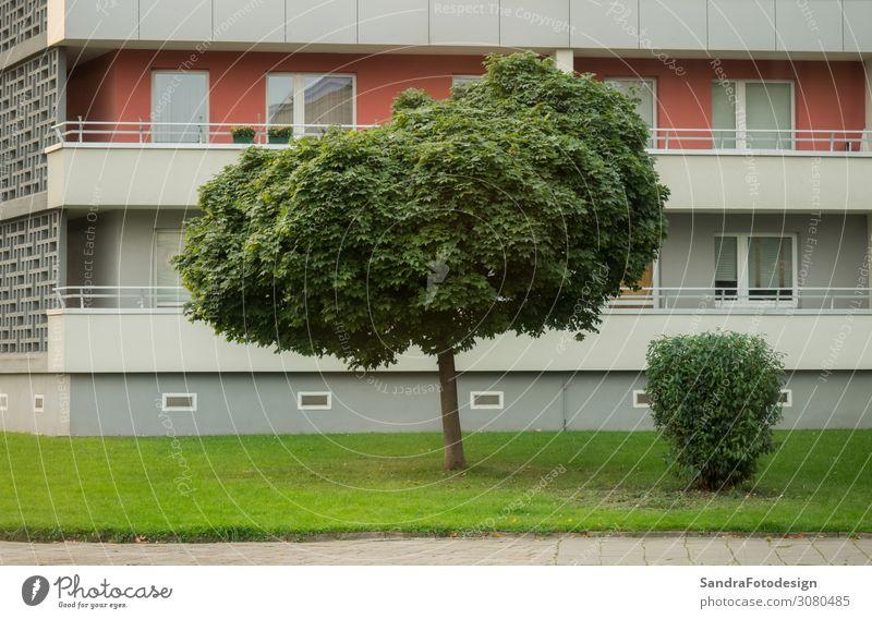 Lawn and tree in front of a high rise in the city Wohnung Business Park Stadt Haus Hochhaus Mauer Wand Garten Fenster Briefkasten Häusliches Leben groß lawn
