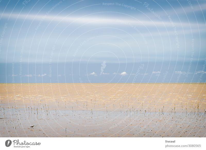 Cairns Beach, Australien Erholung Ferien & Urlaub & Reisen Ausflug Strand Meer Pflanze Tier Sand Himmel Wolken Küste Dorf Stadt Vogel blau Frieden Gezeiten
