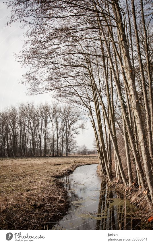 ein bisschen frühling. Wiese Wassergraben Außenaufnahme Menschenleer Gras Wald Natur Landschaft Baum Tag Feld Frühling Spiegelung im Wasser