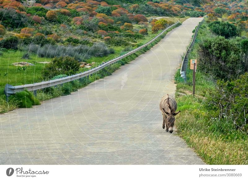 Lonely Road Ferien & Urlaub & Reisen Tourismus Ausflug Insel Verkehrswege Straße Wege & Pfade Tier Nutztier Wildtier Esel 1 gebrauchen gehen Bekanntheit