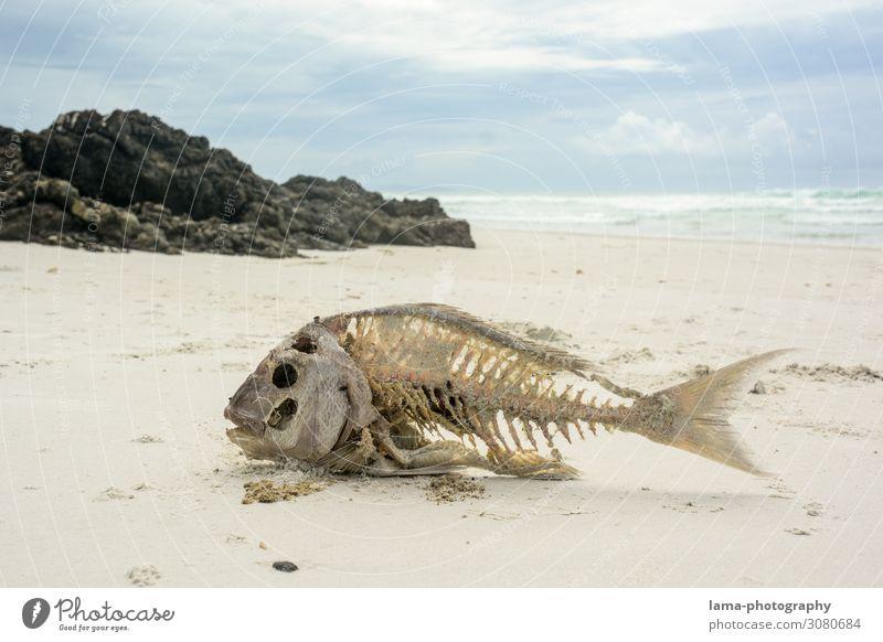 Harte (Ge)Zeiten Neuseeland Strand Sand Sandstrand Sonnenschein Meer Ferien & Urlaub & Reisen Natur Schönes Wetter Tourismus Fisch Skelett verhungern Dürre Tod
