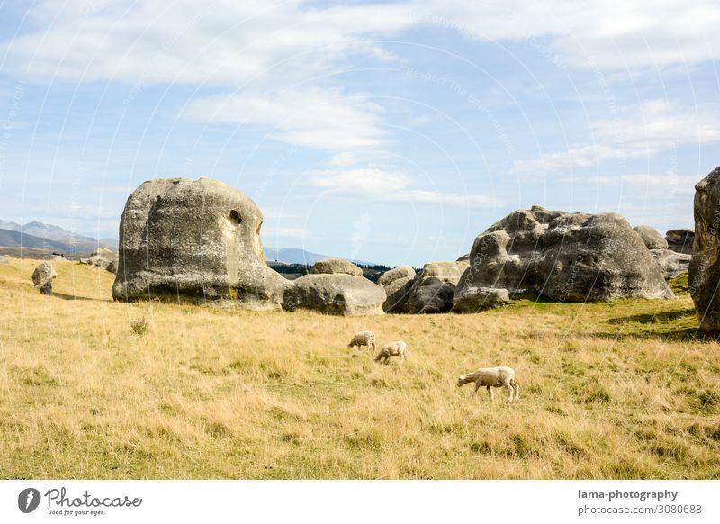 Elephant Rocks Ferien & Urlaub & Reisen Natur Landschaft Gras Tourismus Felsen Ausflug wild Abenteuer Sehenswürdigkeit Hügel Schaf Elefant Nutztier Schafherde