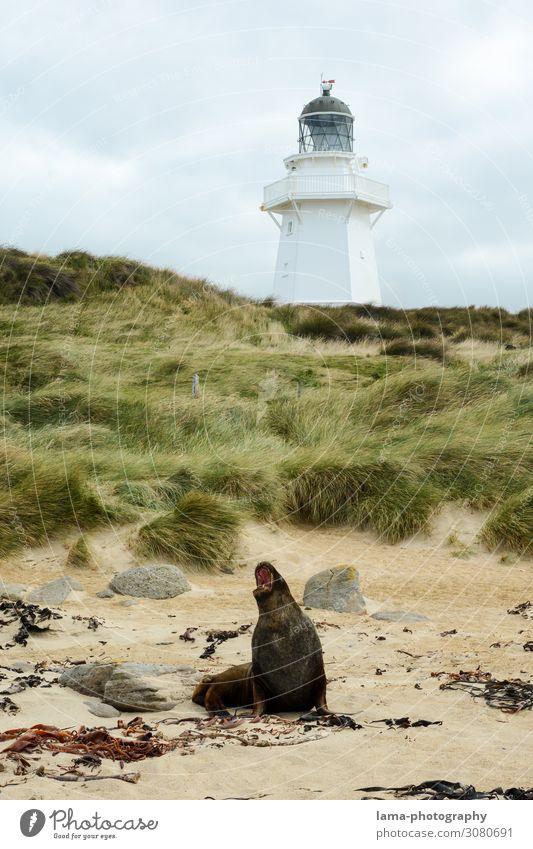 Waipapa Point Lighthouse Ferien & Urlaub & Reisen Natur Landschaft Tier Ferne Strand Küste Tourismus Freiheit Ausflug wild Abenteuer Sehenswürdigkeit