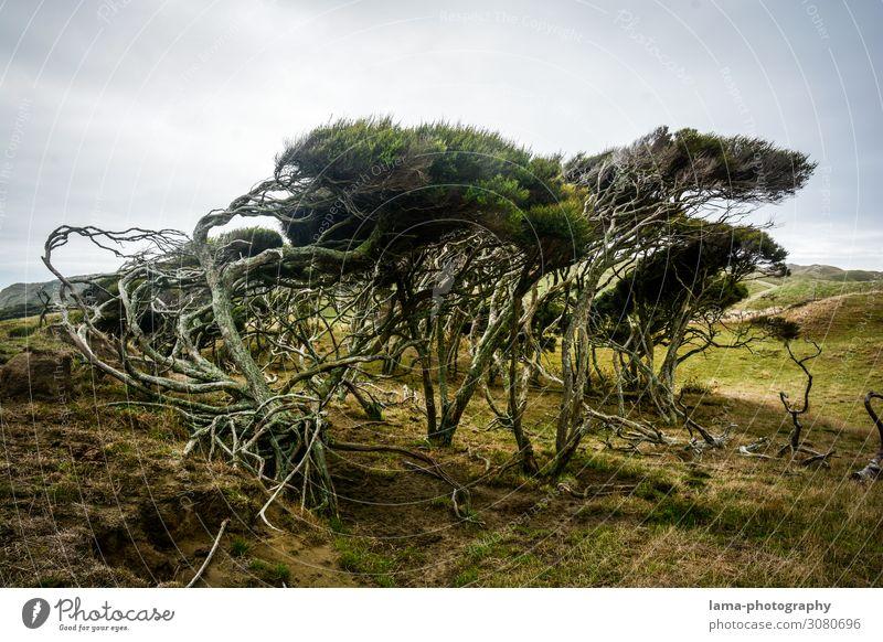 Wilde Küste Neuseeland Sturm stürmisch Baum windig wild Natur Wildnis Landschaft Ferien & Urlaub & Reisen Küstenlandschaft Naturgewalt Wind formen biegen
