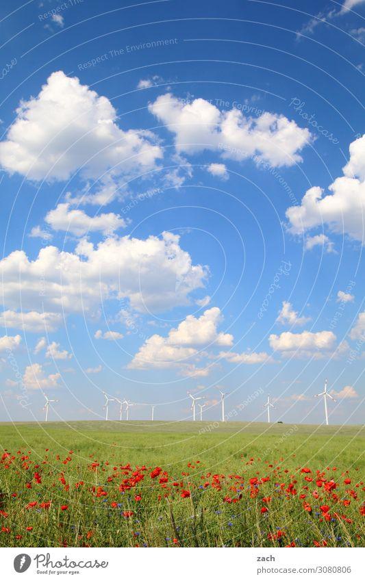 Feldstudie Energiewirtschaft Erneuerbare Energie Windkraftanlage Natur Pflanze Himmel Wolken Frühling Sommer Schönes Wetter Gras Blüte Grünpflanze Nutzpflanze
