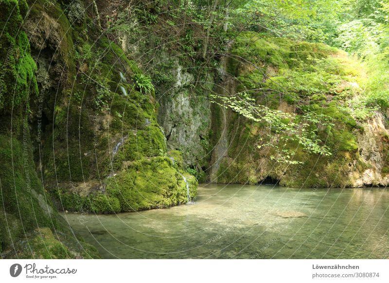 Erholung in Grün Natur Sommer Pflanze grün Wasser Landschaft Baum ruhig Wald Leben natürlich braun wandern frisch Idylle