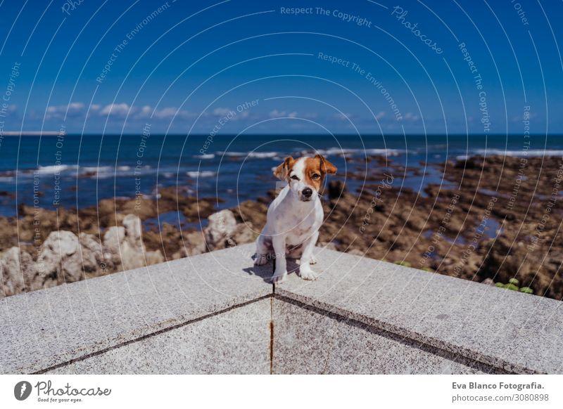 süßer kleiner Jack-Russell-Terrier, der im Freien sitzt und in die Kamera schaut. Ozean und Felsen im Hintergrund an einem sonnigen Tag. Haustiere im Freien und Lebensweise. Sommer-Konzept