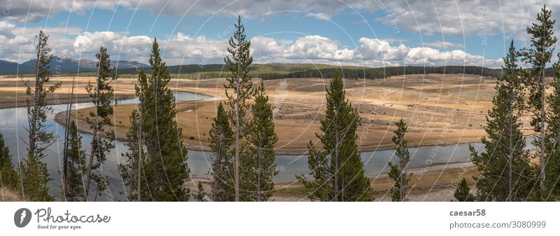 Panorama of the Yellowstone River Natur Landschaft Pflanze Tier Sommer Herbst Baum Feld Wald Hügel Bach Fluss Yellowstone Nationalpark Bison Büffel Tiergruppe