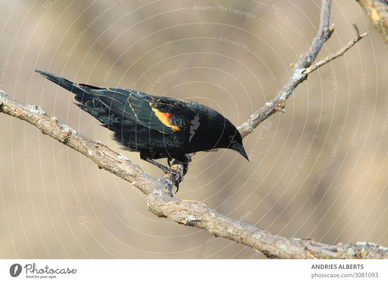 Ferien & Urlaub & Reisen Natur schön rot Sonne Erholung Tier ruhig Umwelt natürlich Tourismus Freiheit orange Vogel braun grau