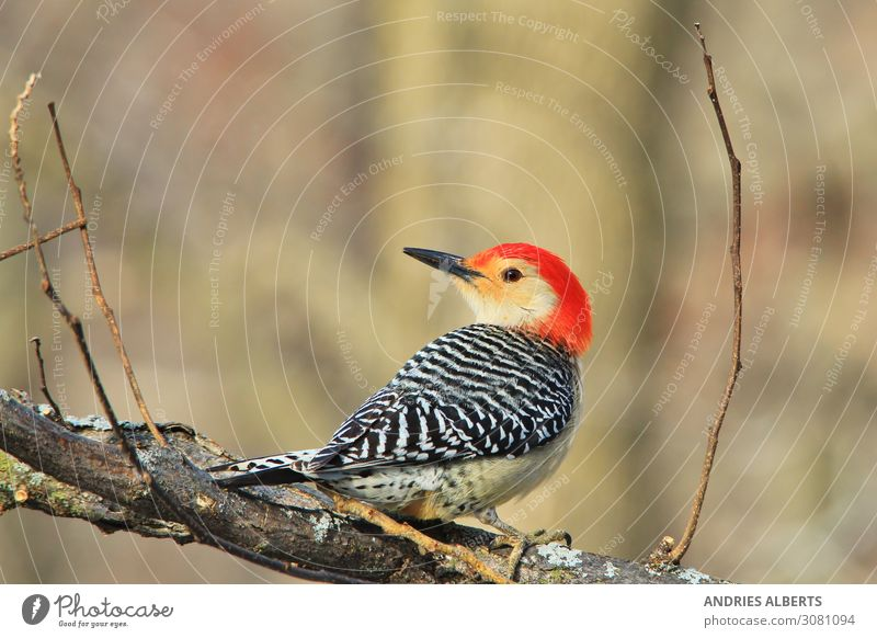 Ferien & Urlaub & Reisen Natur schön rot Tier ruhig Wald Leben Herbst Umwelt Tourismus Vogel rosa Ausflug Park elegant