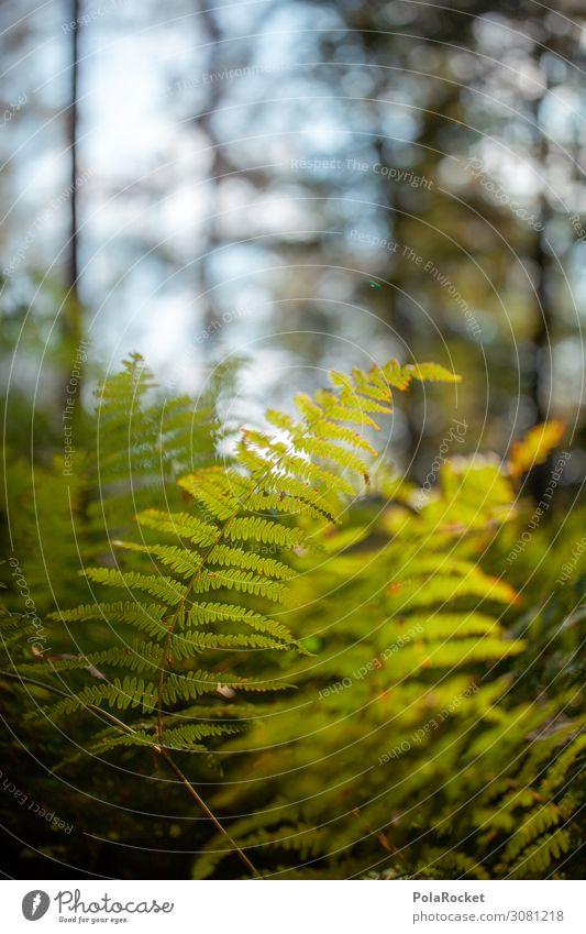 #A# Waldboden Umwelt Natur Landschaft Pflanze ästhetisch Farn Echte Farne Farnblatt Waldlichtung Waldwiese Waldspaziergang Sächsische Schweiz Farbfoto