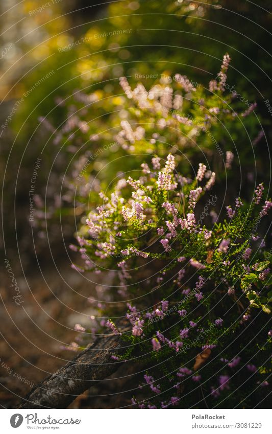 #A# Schweizer Teppich Umwelt Natur Landschaft Pflanze ästhetisch Wald Waldboden Waldlichtung Waldrand Waldwiese Waldspaziergang Heide Heidekrautgewächse