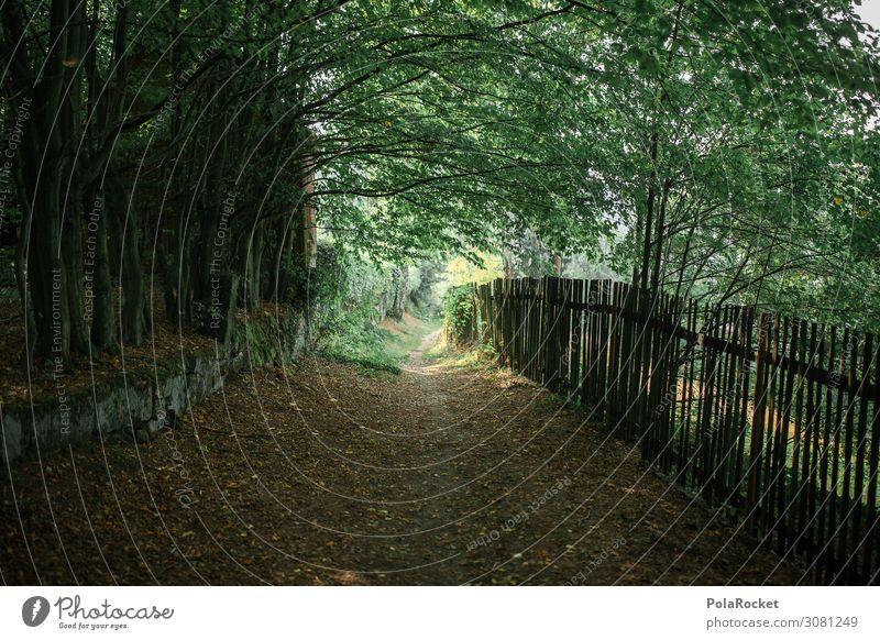#A# Wanderweg Kunst ästhetisch Fußweg Wege & Pfade Natur Zaun Landleben Landschaft Wald Baum grün Farbfoto Gedeckte Farben Außenaufnahme Menschenleer