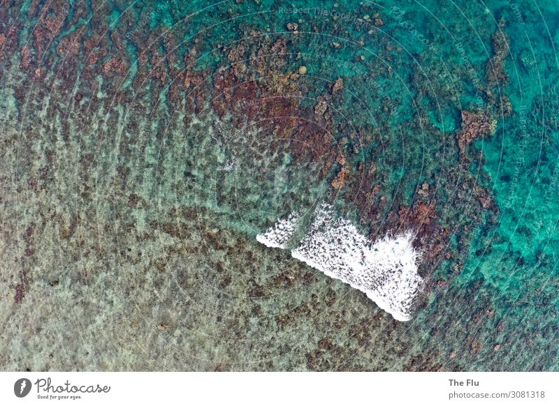 Korallenriff auf Mauritius Ferien & Urlaub & Reisen Tourismus Ferne Kreuzfahrt Sommer Sommerurlaub Meer Wellen Segeln tauchen Umwelt Natur Wasser Klima