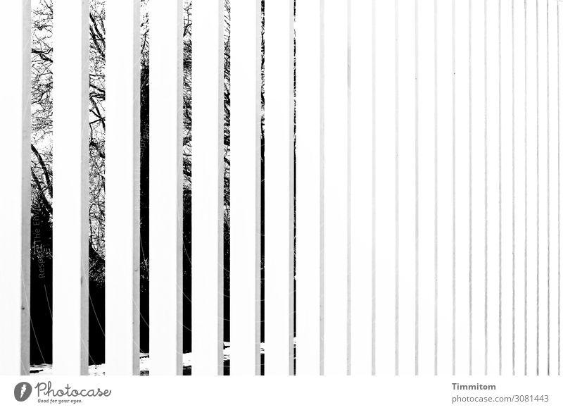 Sichtschutz Wohnung Garten Gitter Metall Linie ästhetisch kalt grau schwarz weiß Gefühle Angst aussperren Sicherheit Sträucher Zweige u. Äste Schwarzweißfoto