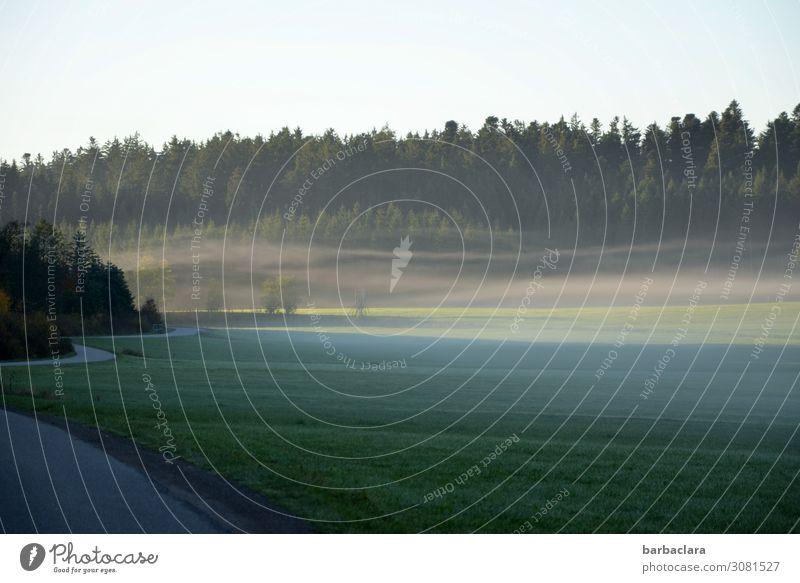 on the road again | an einem nebligen Herbstmorgen Natur Landschaft Himmel Nebel Wiese Wald Straße kalt Stimmung Beginn Horizont Klima Wege & Pfade Farbfoto