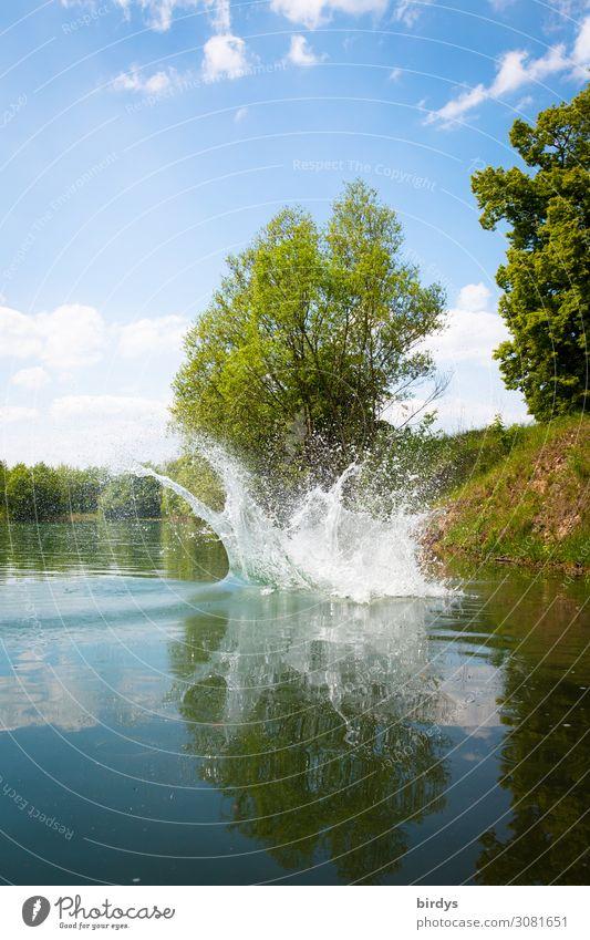 Platsch Schwimmen & Baden Sommer Natur Wasser Wassertropfen Schönes Wetter Pflanze Baum Seeufer Wasserspritzer springen authentisch einzigartig nass positiv