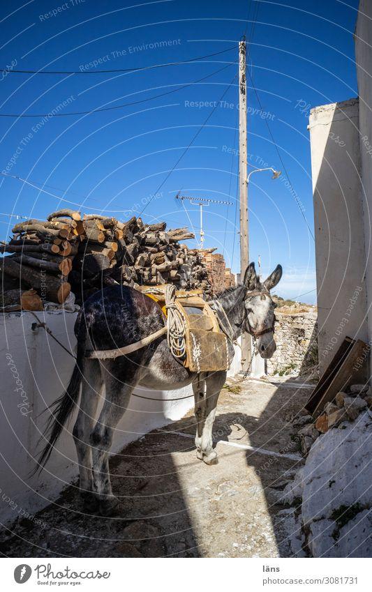 Esel l on the road again Insel Naxos Griechenland Dorf Mauer Wand Verkehr Verkehrswege Wege & Pfade Tier 1 beobachten stehen authentisch Beginn nachhaltig Pause