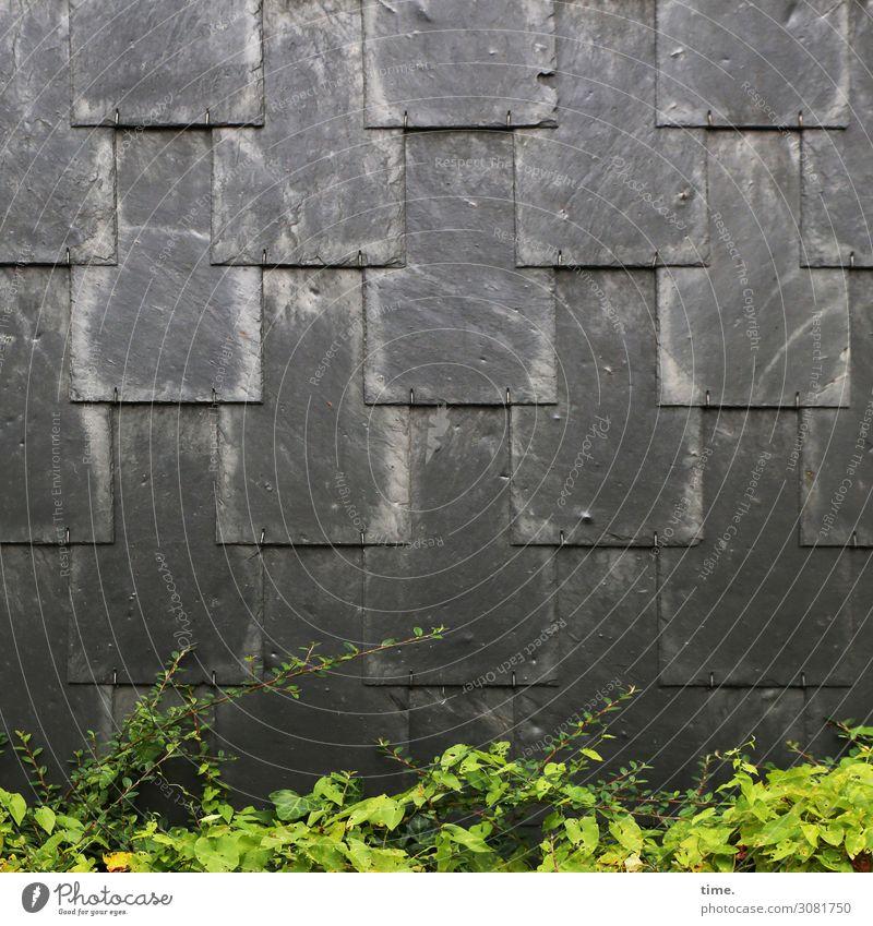 Lappentechnik | Architektur und Natur busch strauch wand hecke grünanlage wärme hitze anthrazit schwarz schindeln schiefer schieferplatte überlappen