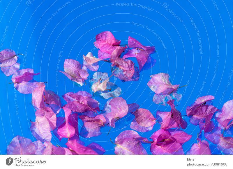 Blüten am Pool Ferien & Urlaub & Reisen blau Tourismus außergewöhnlich rosa Häusliches Leben Schwimmbad exotisch Leichtigkeit Wasseroberfläche Griechenland