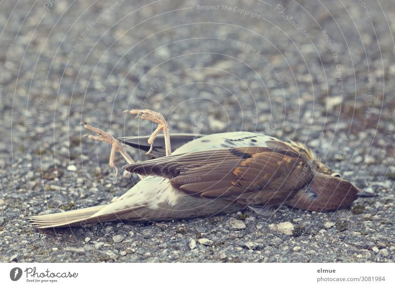 ausgeflogen Natur ruhig Straße Traurigkeit klein Tod Vogel liegen Wildtier Feder gefährlich Vergänglichkeit Flügel bedrohlich Trauer Zukunftsangst