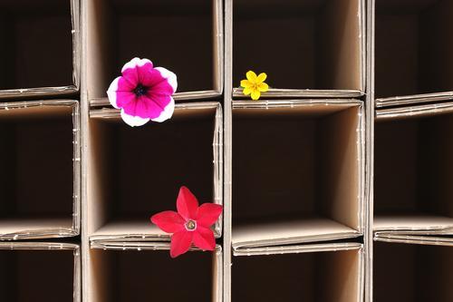 geordnet Dekoration & Verzierung Quadrat Linie Blühend liegen einfach mehrfarbig Freude Romantik Ordnungsliebe ästhetisch Design Farbe Kreativität nachhaltig