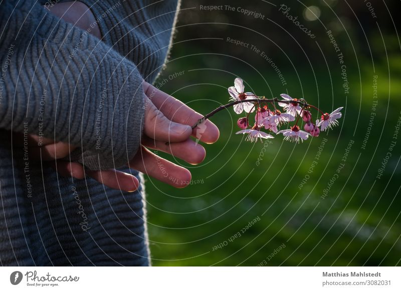 Blumen in der Hand Finger 1 Mensch 18-30 Jahre Jugendliche Erwachsene Umwelt Natur Pflanze Blüte Wildpflanze berühren Blühend Duft festhalten Glück natürlich