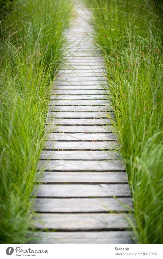 Nicht vom Pfad weichen Ferien & Urlaub & Reisen Natur Sommer Pflanze Landschaft Wege & Pfade Gras Tourismus Ausflug wandern Sträucher Sicherheit Steg Sumpf Moor